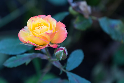 Flower IStock Photography
