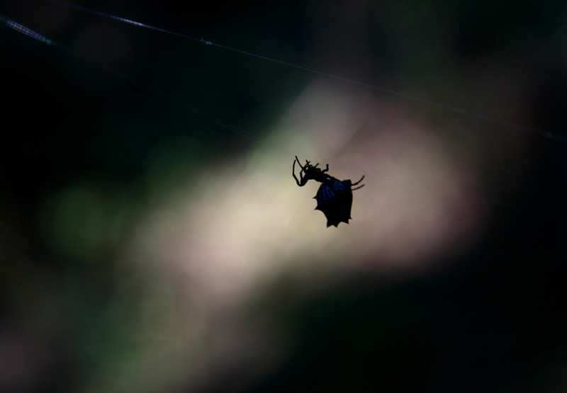 """Black Spider.  I wanted to call this """"Black Widow"""", but its not so I cant."""