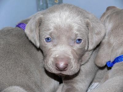 "Junkyard Dogs ""Myra and her puppies"" '07"