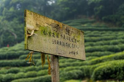 Longjing Village - Dragon Well Tea Plantation