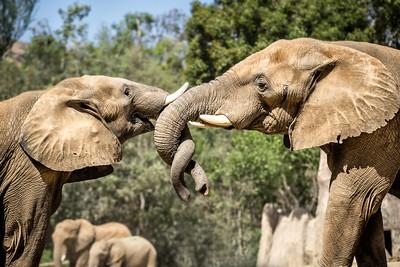 Elephant Helix