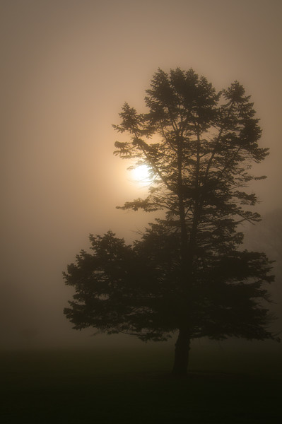 Morning fog in Crown Hill