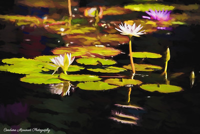 Water lilies (digital art)