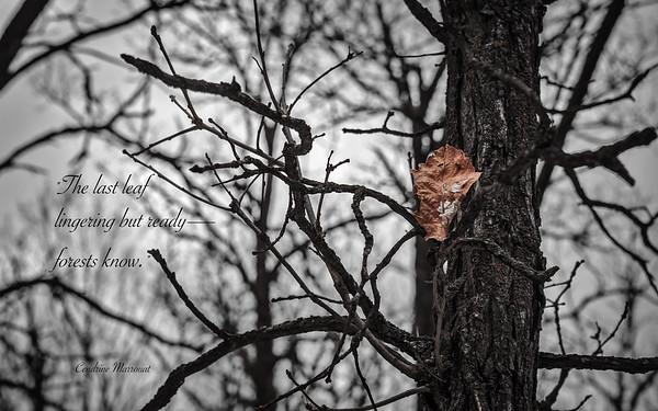 Haiku 36
