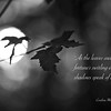 Haiku 31