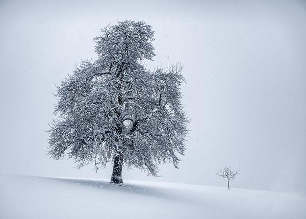 Snowfall tree