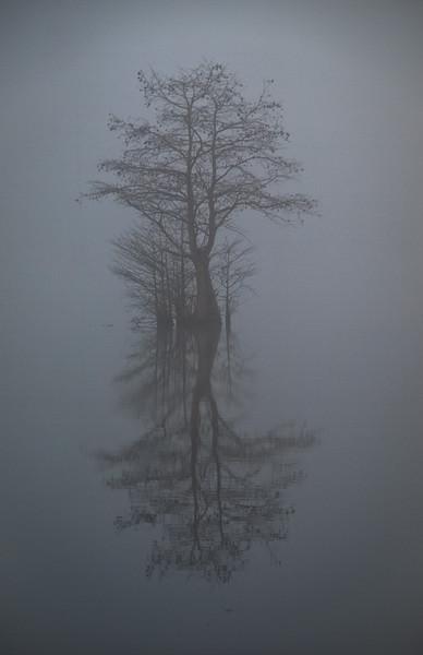 Rhodes Pond 1
