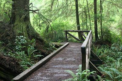 California Redwoods/Trinadad (2006)