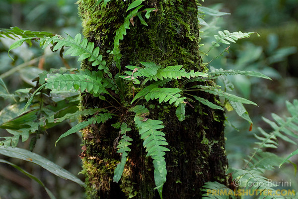 Epiphytes growning on mossy trunk