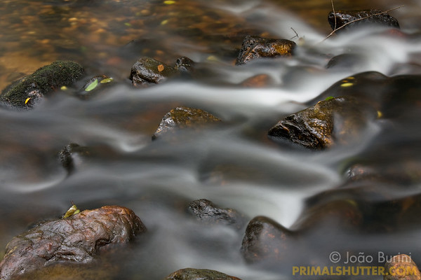 Flowing motion of a rainforest stream