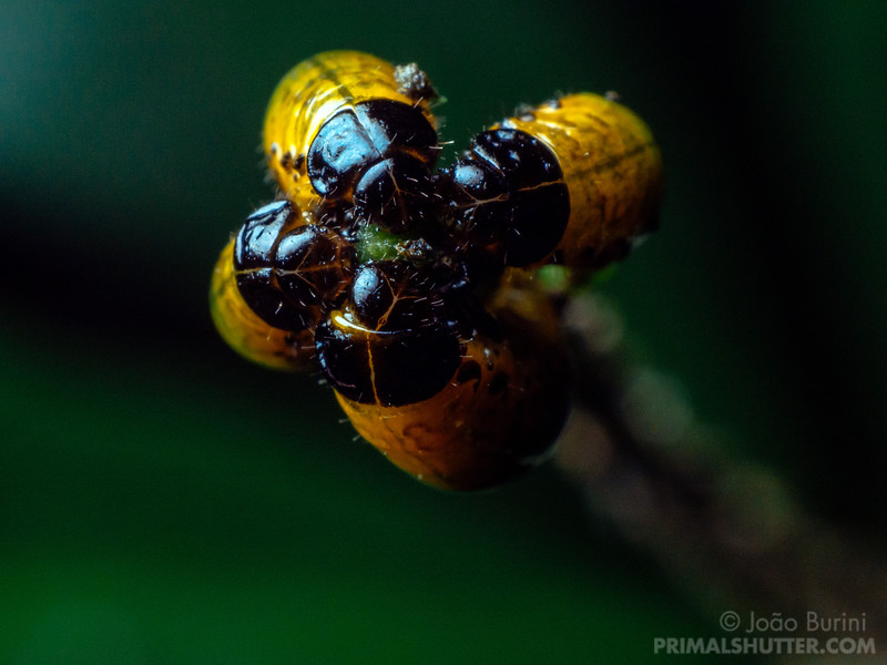 Beetle grubs grouped around a plant stalk