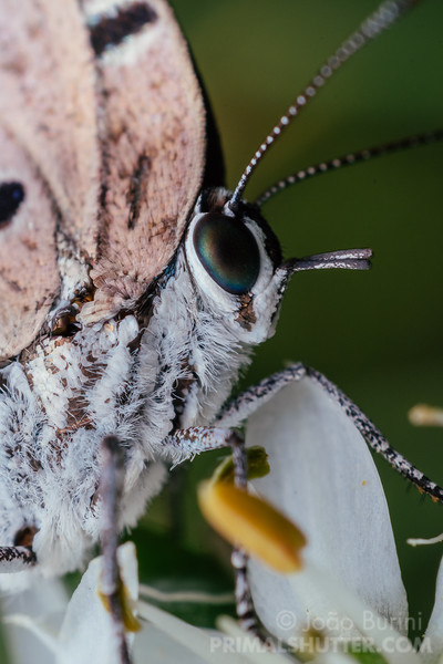 Portrait of a white butterfly