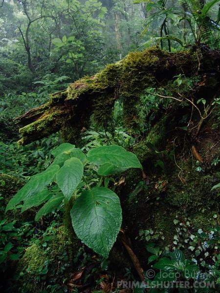 Mantiqueira atlantic rainforest