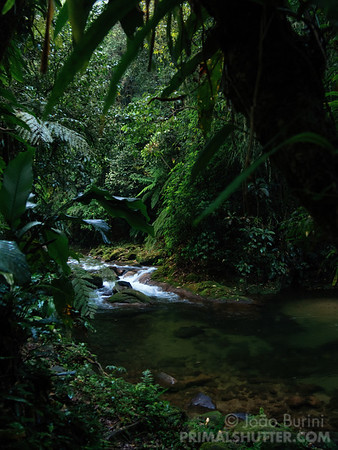 River crossing the southeastern atlantic forest