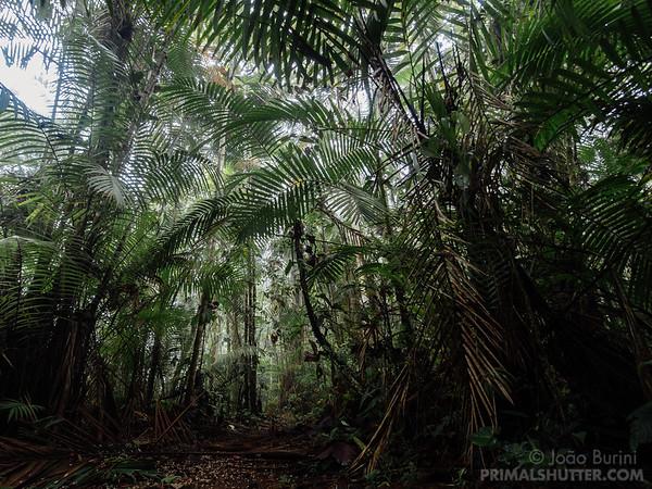 Cloud forest habitat