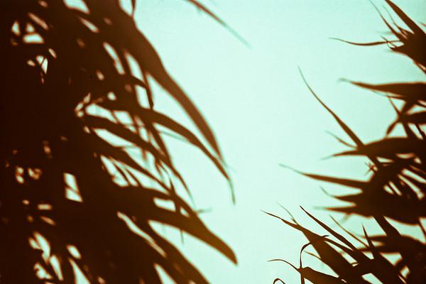 Leaves Behind Shoji