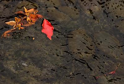 Leaves In Sream