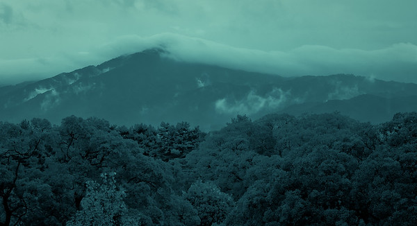 Mt. Hiei and Trees