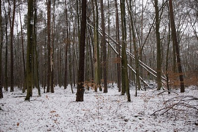winterforest 1