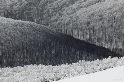 Lasy w dolinie górnej Wołosatki Bieszczady ©Mateusz Matysiak