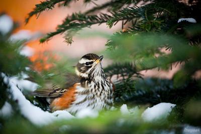W zimowym gniazdku