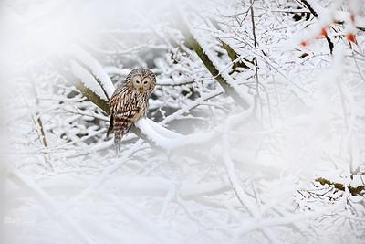 W śnieżnych ostępach
