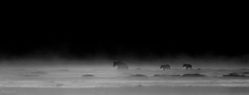 Nocne mary w blasku mgieł