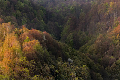Cienista dolinka w biesowej dżungli
