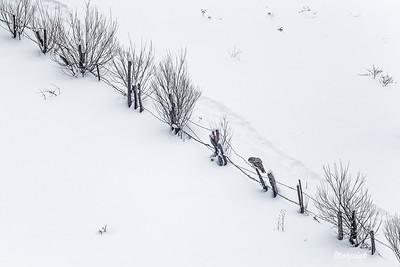 Zimowy pastuch