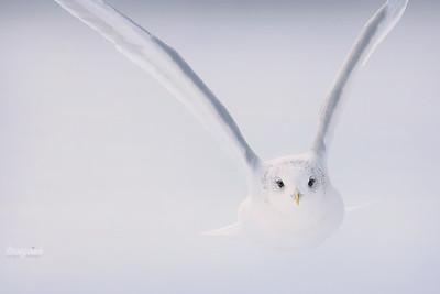 Anioł nadlatuje