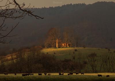 Stado żubrów (Bison bonasus) pod ruinami cerkwi pw. św. Paraskiewii Krywe, dolina Sanu Bieszczady ©Mateusz Matysiak