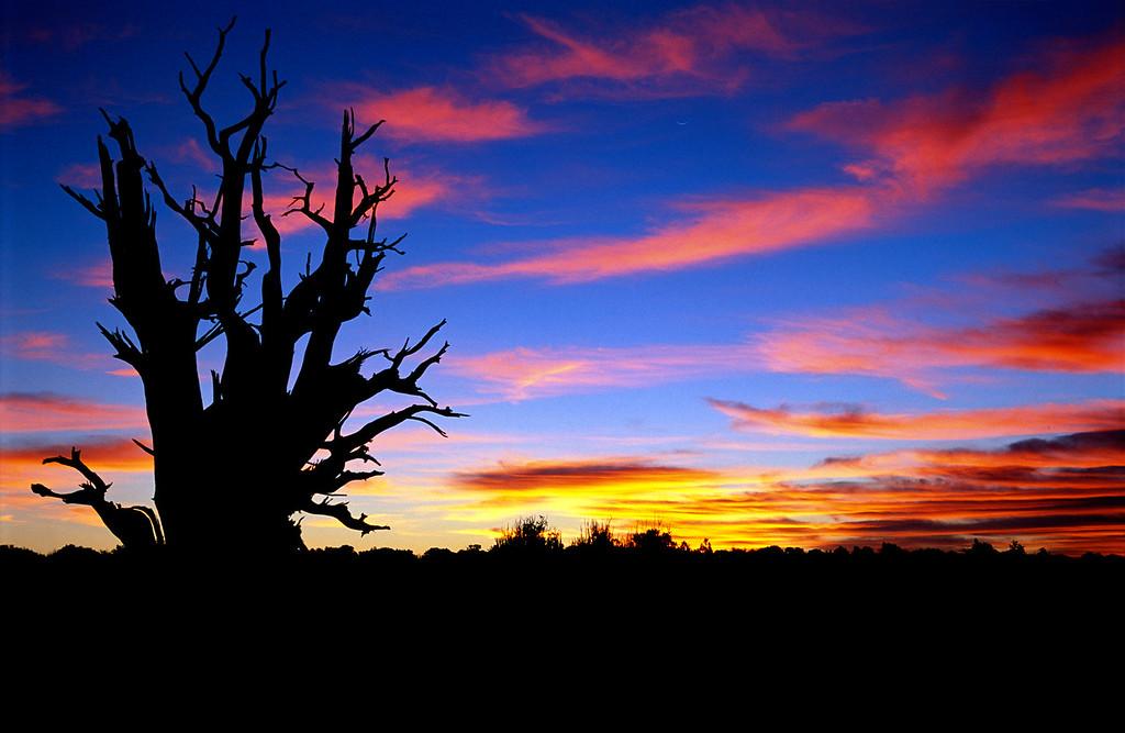 Escalante Dawn