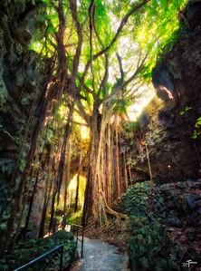 Valley of Gangala Banyan Trees