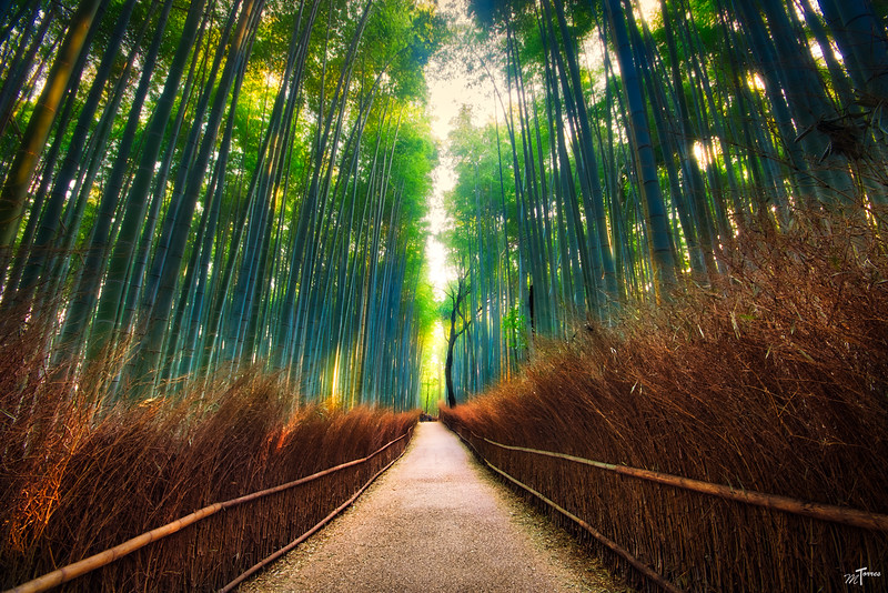 Bamboo Forest Perfection