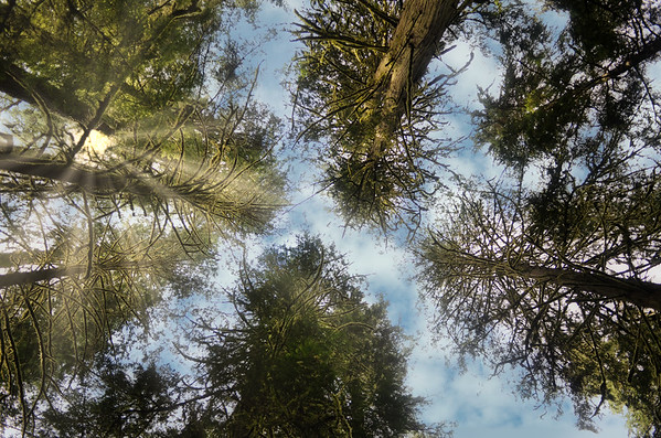 Cathedral Grove Provincial Park, Vancouver Island