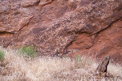 Grasses and lichen along the Devil's Garden trail in Arches NP