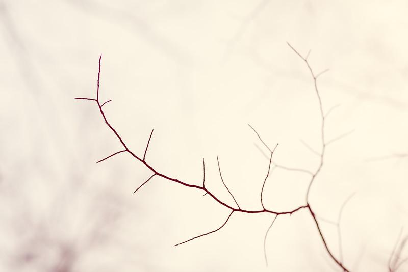_MG_2081-Edit