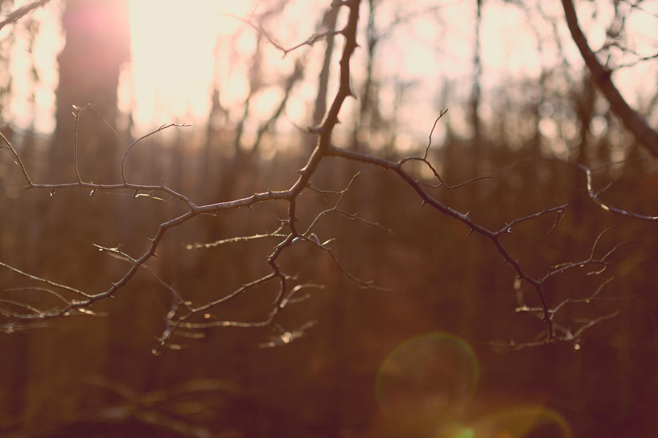 _MG_0393-Edit
