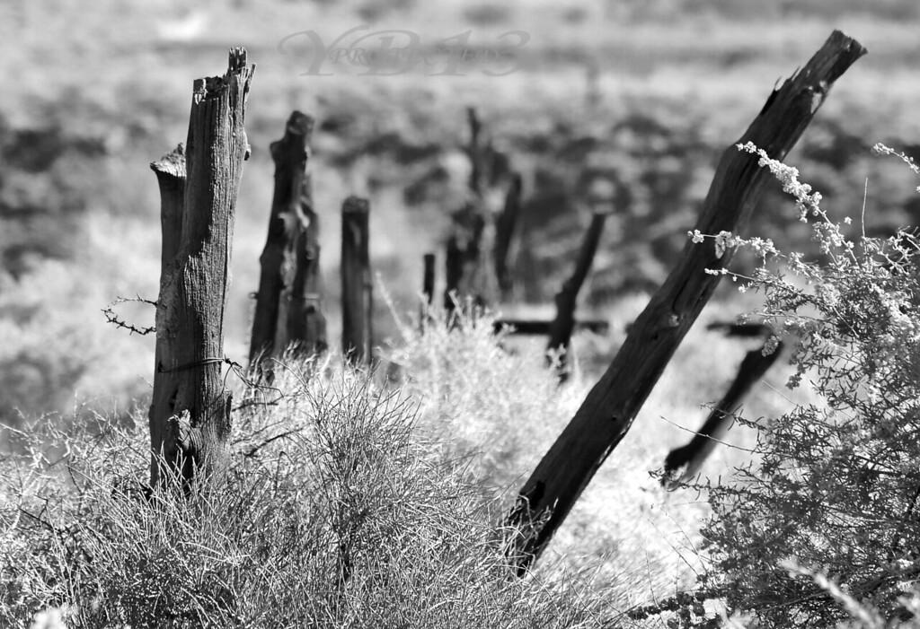 Old fence line..st. george ut