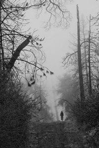 Lone Rider in the Fog