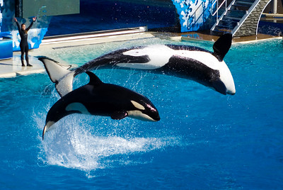 Sea World's Shamus San Diego, CA - January 2007