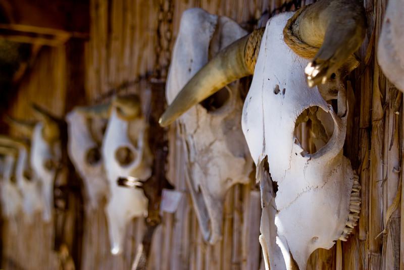 Skulls<br /> Mesilla, NM - April 2007