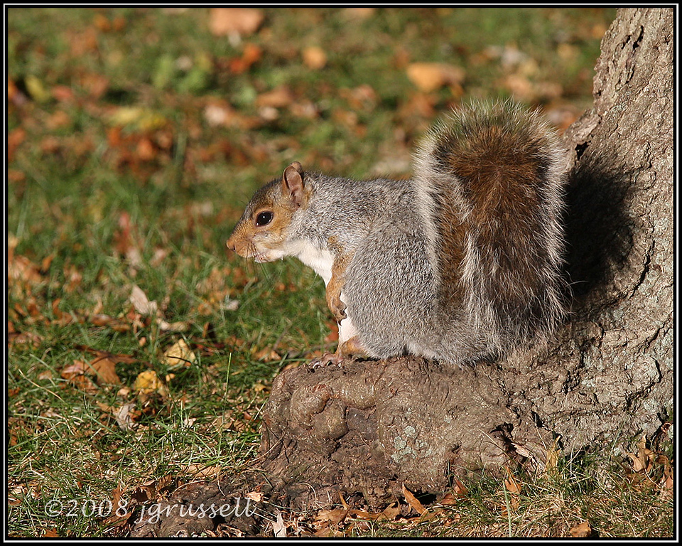 Squirrel on tree root