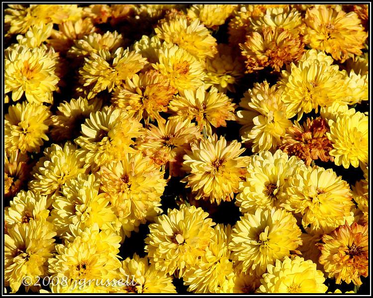 Last flowers of October