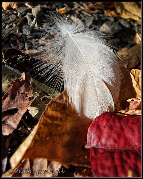 Feather among autumn leaves