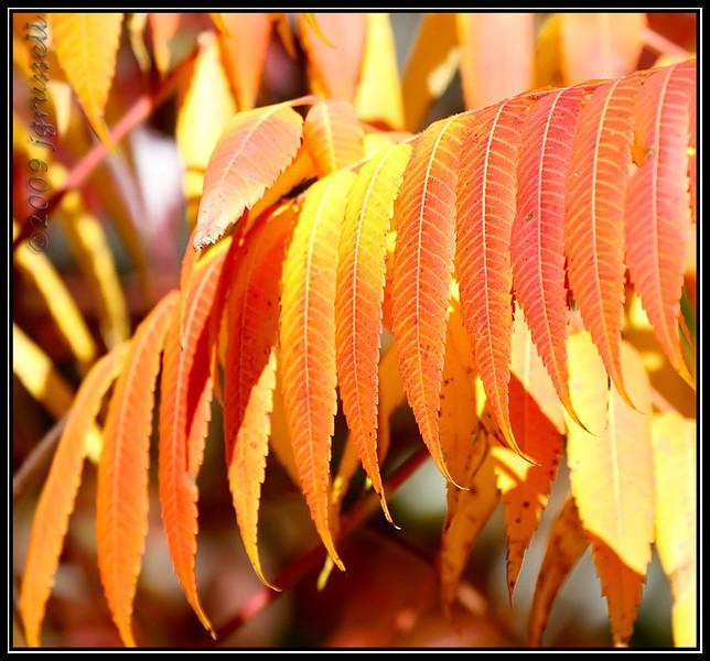 The colors of autumn<br /> Sandy Hook NJ