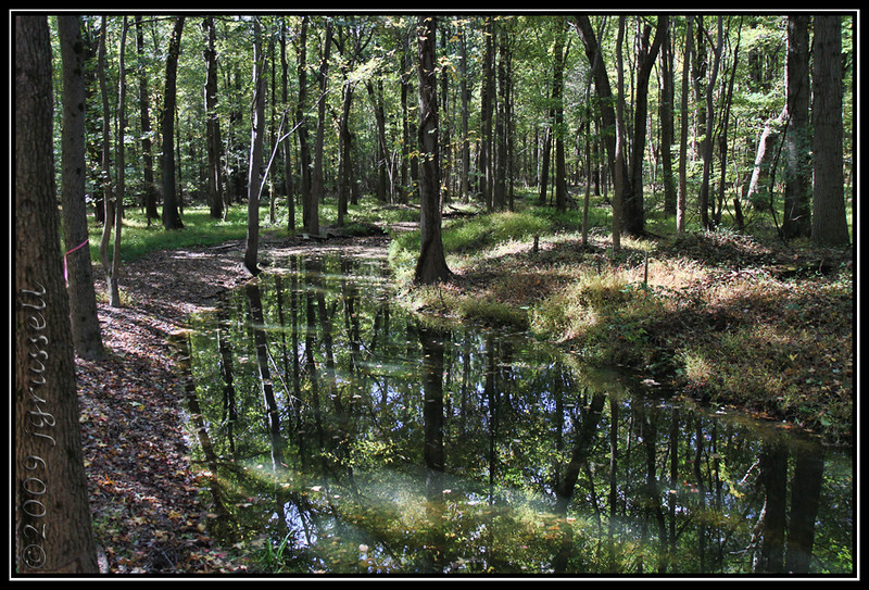 Stream<br /> Plainsboro Preserve