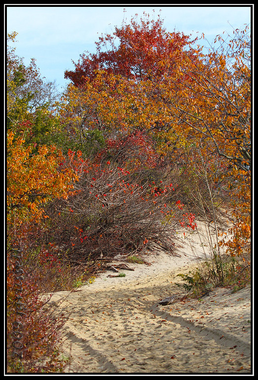 The colors of autumn<br /> Sandy Hook NJ