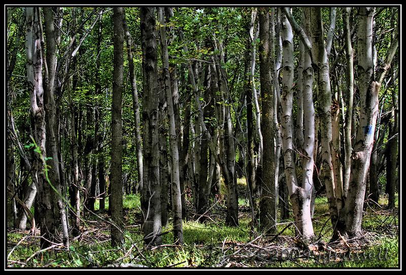 Grove<br /> Plainsboro Preserve