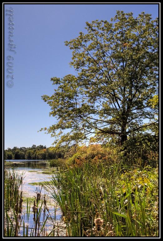 The pond 1